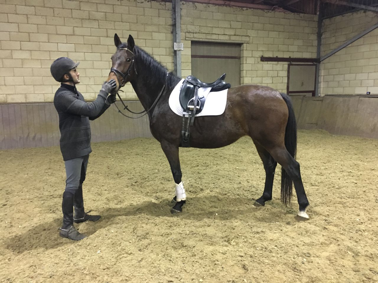Zwembad Bosbad Emmeloord Openingstijden Horses For Sale Ponies For Sale Equirodi Uk