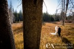 The Meadows in Tahoe Donner are great for environmental bridal portraits. Rachael and Chad.
