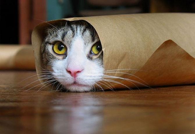 catburrito