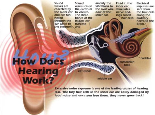 Noise-induced hearing loss is 100 percent preventable 3