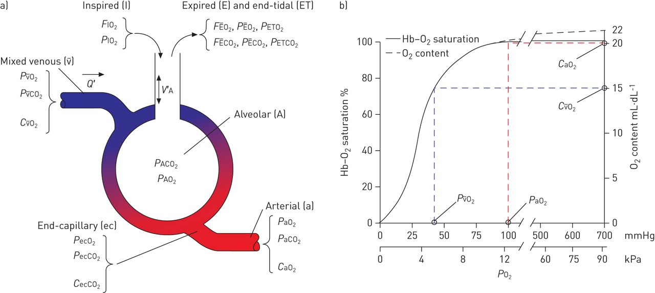 Gas exchange and ventilation\u2013perfusion relationships in the lung
