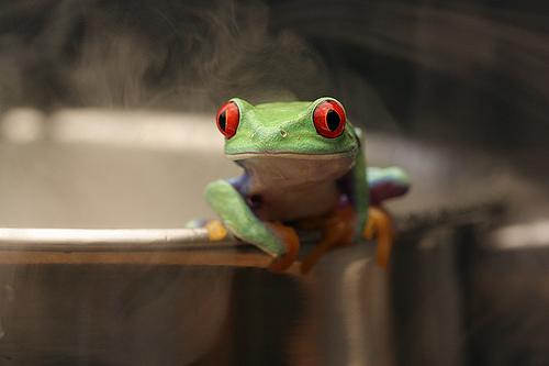 Лягушка в кипящем котле