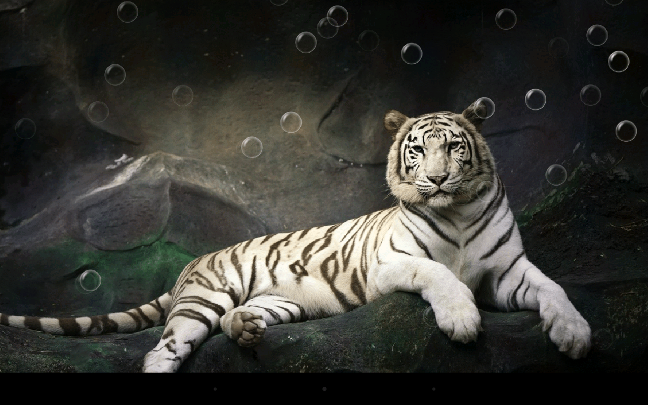 Free Hd Live Wallpapers For Android Phones Tigre Fondo Animado Para Android