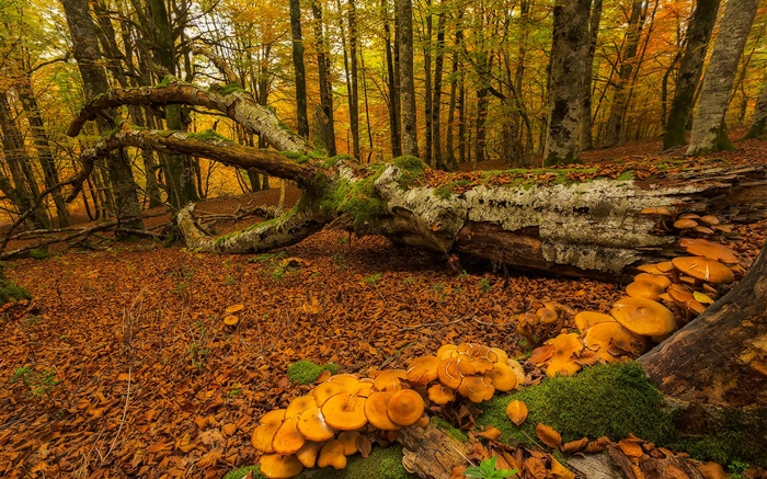 Fall Woods Wallpaper Pa 237 S Vasco Espa 241 A Bosque 225 Rboles Setas Oto 241 O Hd