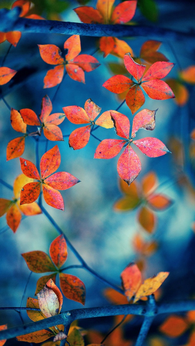 Red Fall Leaves Iphone Wallpaper Red Hojas Ramas Oto 241 O Iphone X 8 7 6 5 4 3gs Fondos