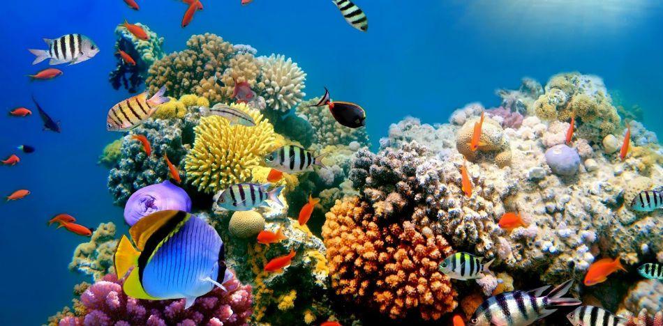 Hd Wallpapers O M 233 Xico Lanza Novedoso Seguro Para Proteger Arrecife De