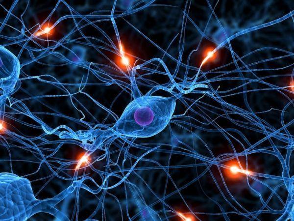 celulas neuronales