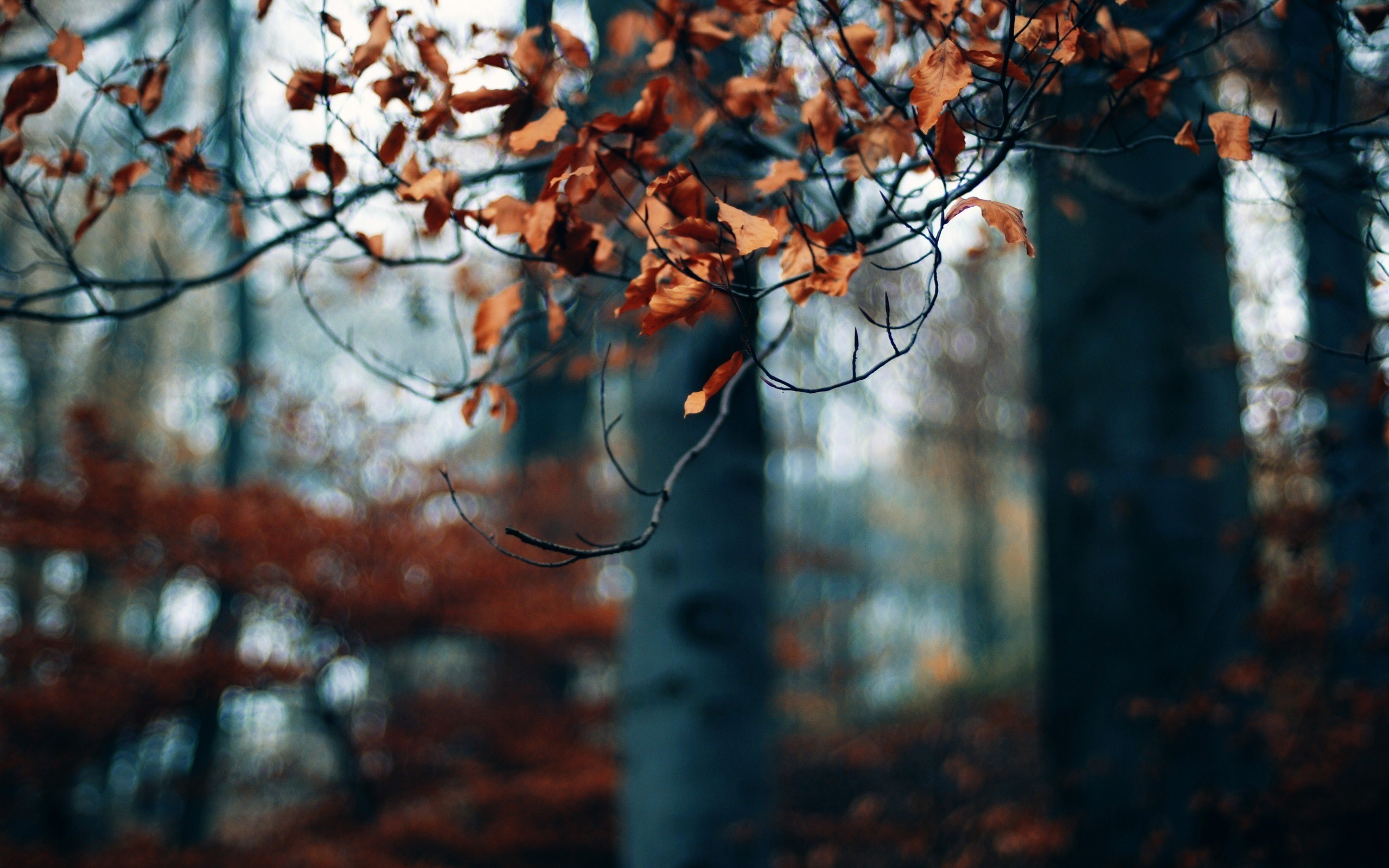 Gloomy Fall Wallpaper Autumn Forest Trees Branches Dry Leaves Photo Wallpaper