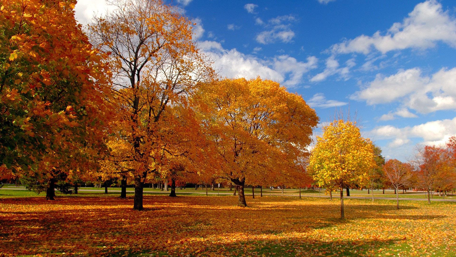 Autumn Fall Wallpaper 1600x900 Fall Trees Wallpaper 1920x1080 79519