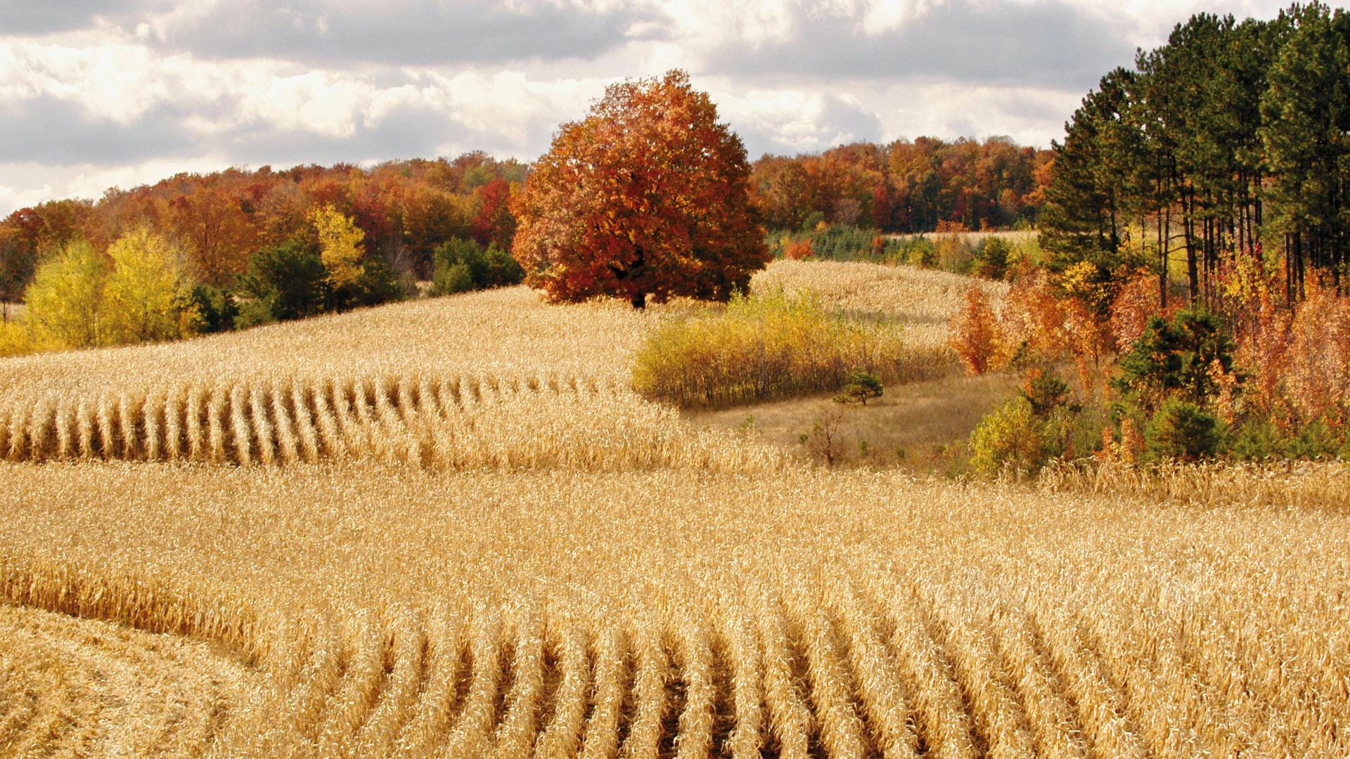Fall Harvest Wallpaper 1024x768 Moon Wallpaper 1024x768 47229