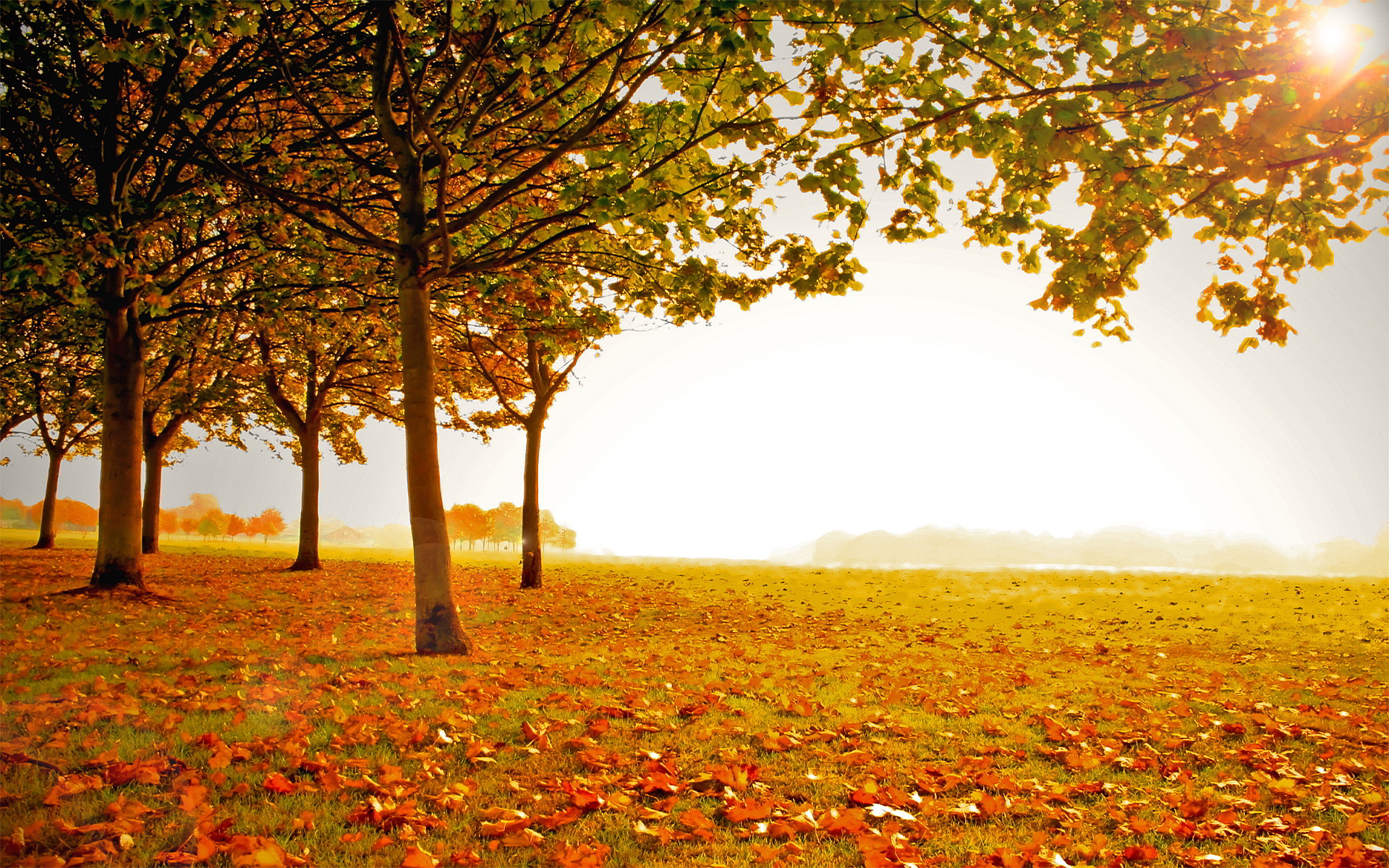 Free Fall Wallpaper With Animals Landscape Autumn Wallpaper 1920x1200 30728
