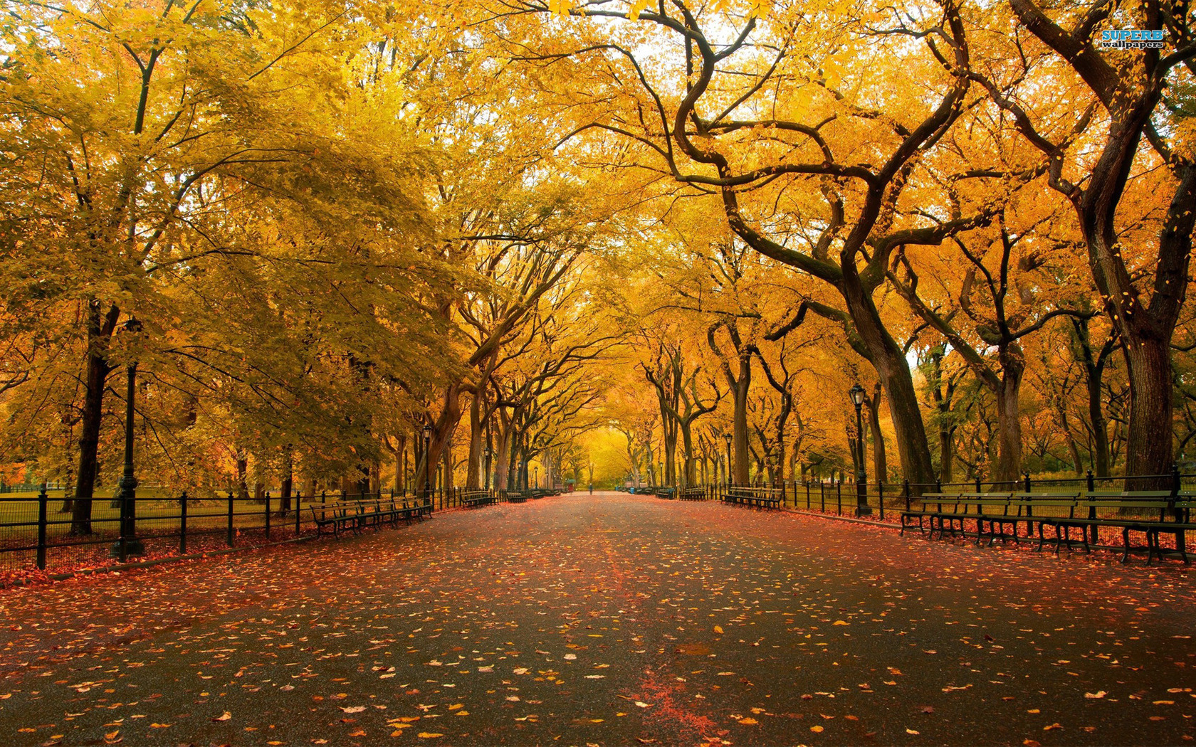 Fall Scenery Wallpapers Free Park Wallpaper 1680x1050 68779