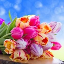 Pretty Colorful Flowers Wallpaper 2560x1600 23423
