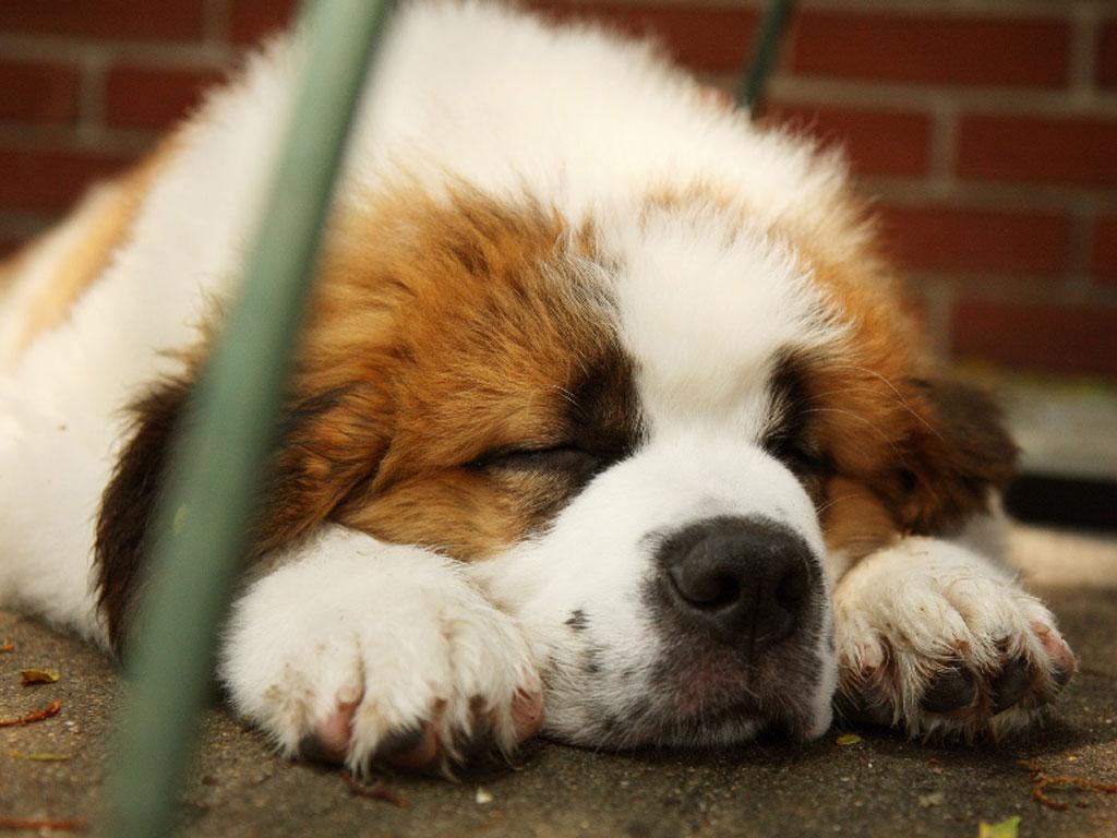Cute Sleeping Puppy Wallpaper Adorable Baby Cheetah Wallpaper 1920x1080 11232