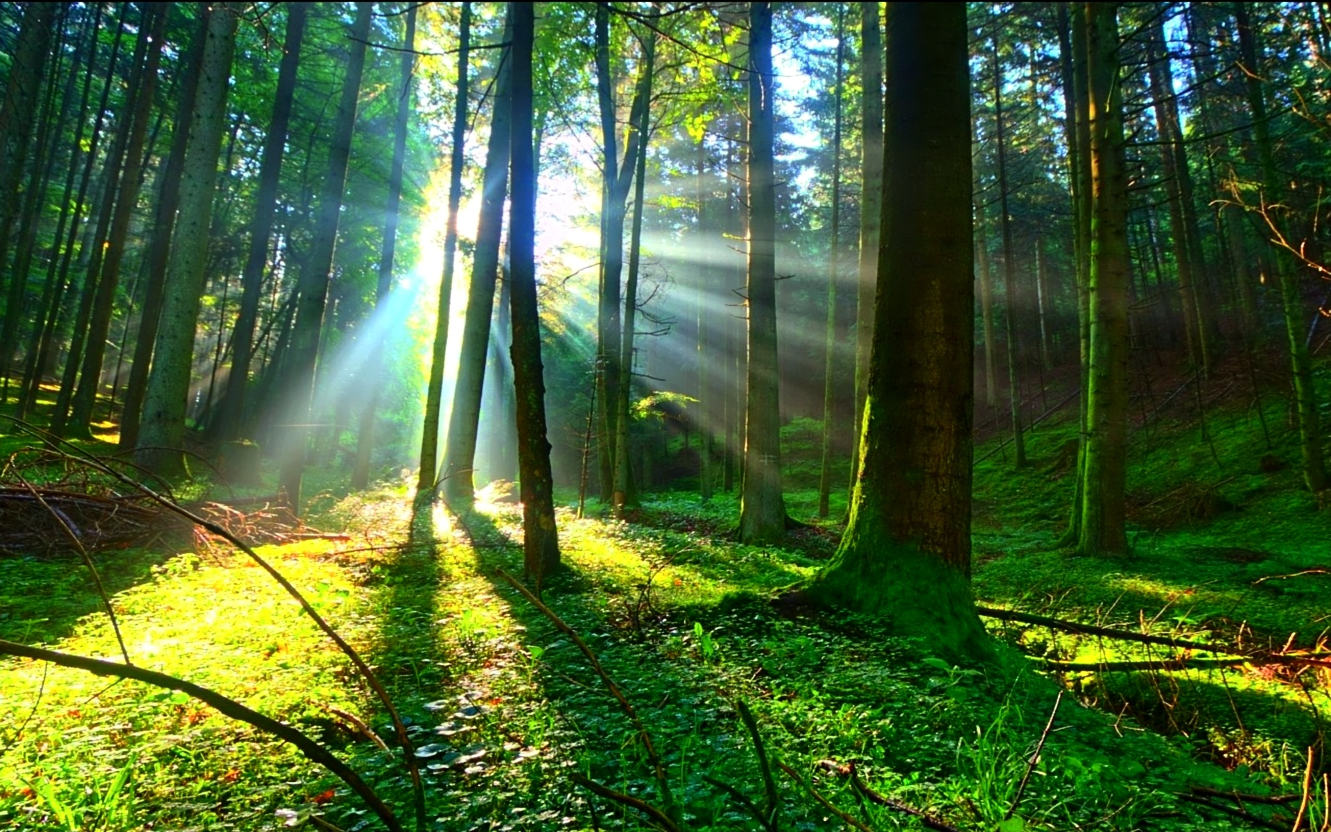 Fantasy Forest 3d Desktop Wallpaper Sunlight Wallpaper 1920x1200 43247
