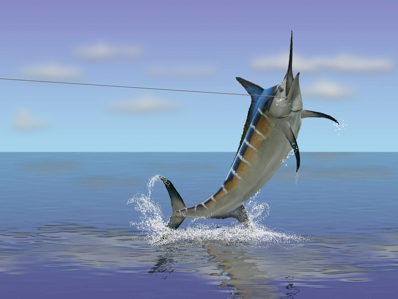 Mahi Name Wallpaper 3d Swordfish Wallpaper 1280x960 59155