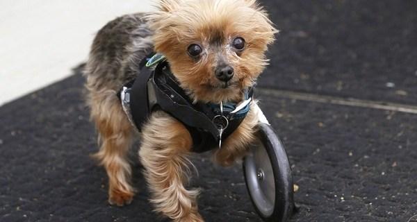 perros discapacitados6