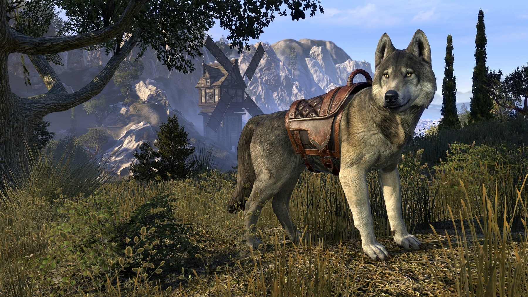 Ice Wolf 3d Wallpaper Download Dark Brotherhood Leitfaden Die Grundlagen The Elder