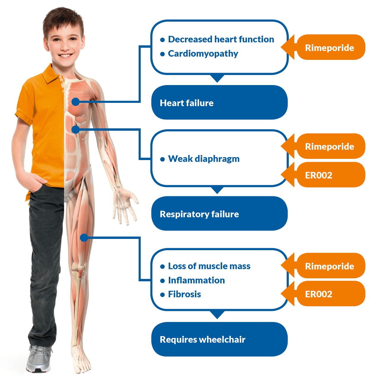 Duchenne Muscular Dystrophy Death Statistics About Duchenne Muscular Dystrophy Esperare Foundation