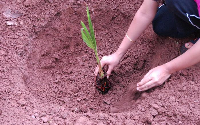 Tree Plantation Essay Essay And Paragraph