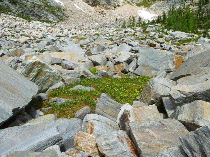 web_Cannabis Lake hike 021