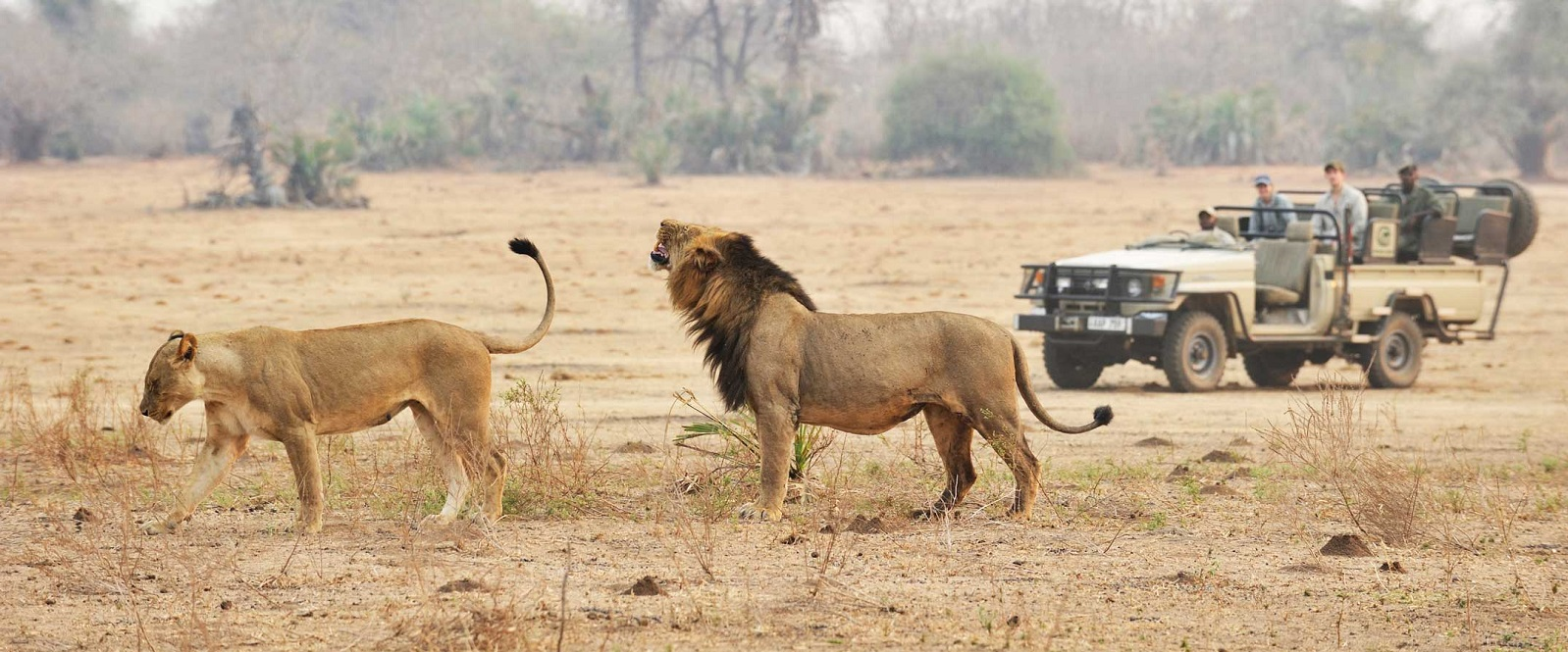 Sitzecke Eternity Top Five Best African Safari Parks You Have To See