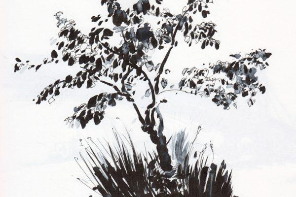 small shrub at Corlear's Hook Park, NY.