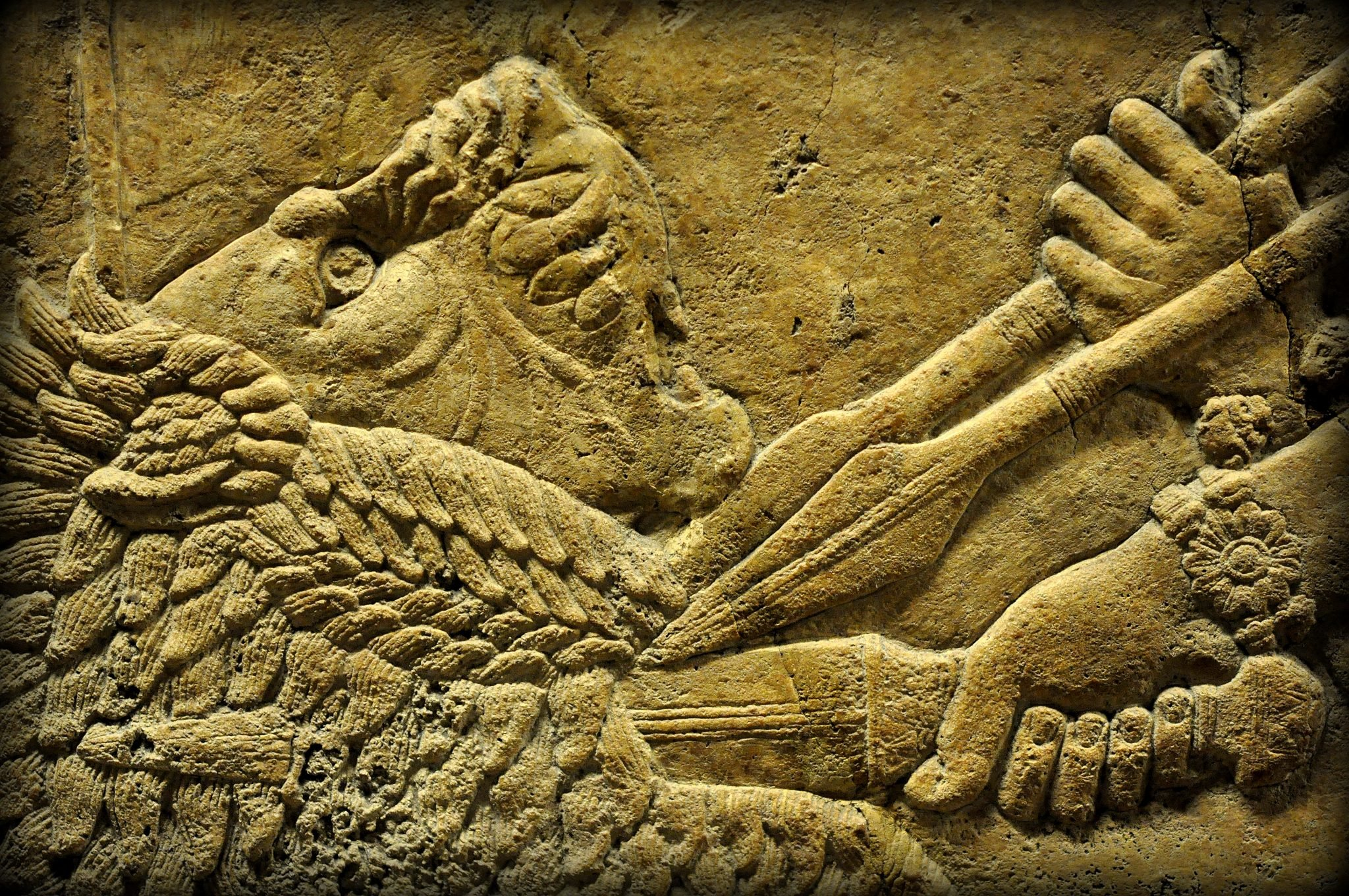 Lion Animal Wallpaper Assyrian Lion Hunting At The British Museum Ancient