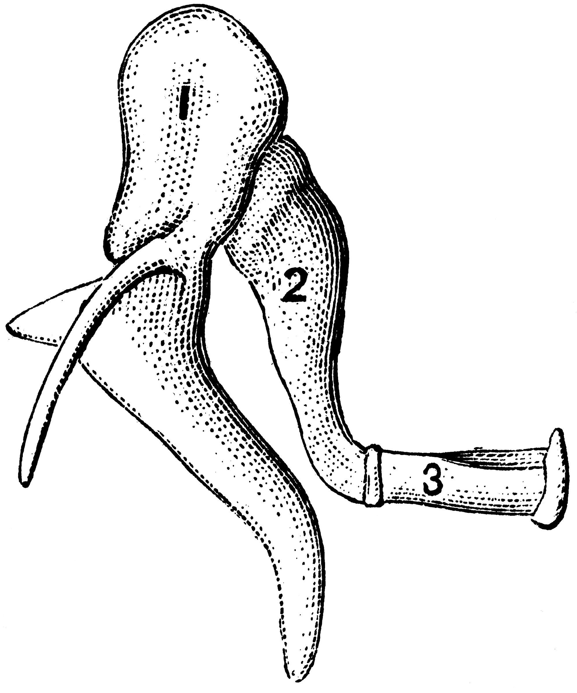 bones of the ear