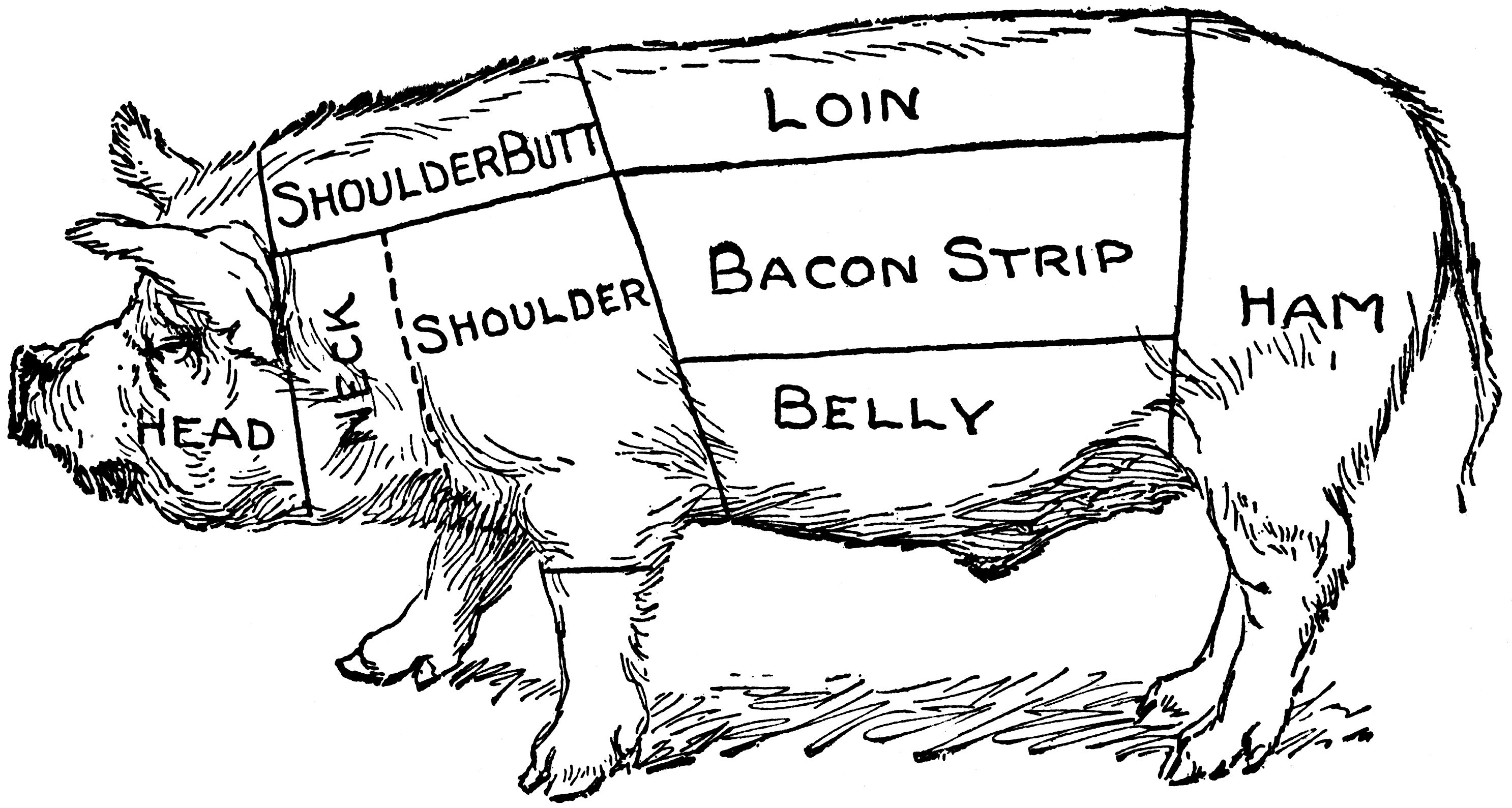 butcher a pig diagram