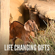 life_changing_gifts