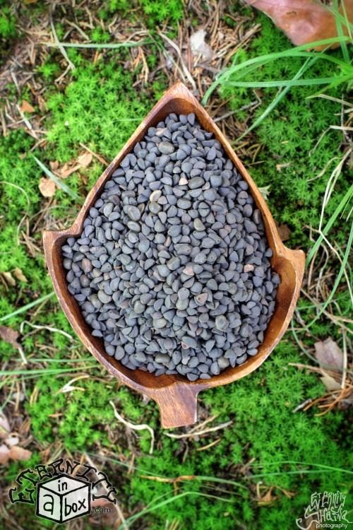 Medium Of Morning Glory Seeds
