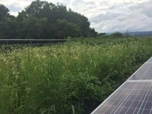 太陽光発電 雑草対策