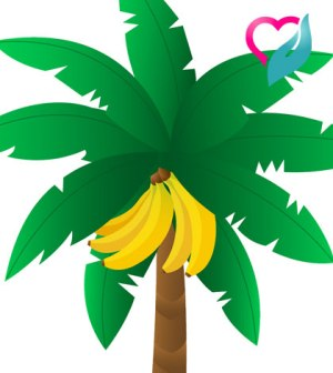 banana and leaves vector