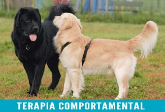 terapia-comportamental1