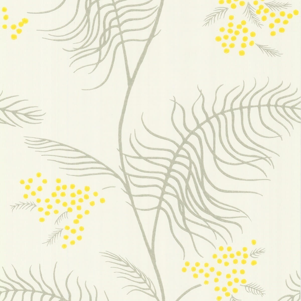 Cole And Son Papier Peint Papier Peint Mimosa Cole And Son