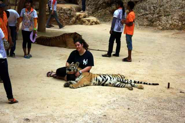 A tourist posing with tiger
