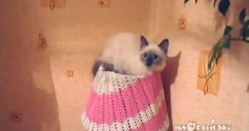 ネコのかくれんぼ