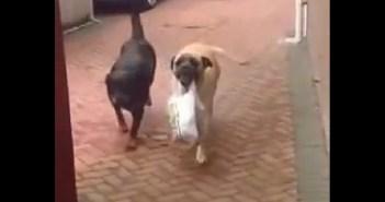 荷物を運ぶ犬