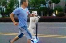 dog_title