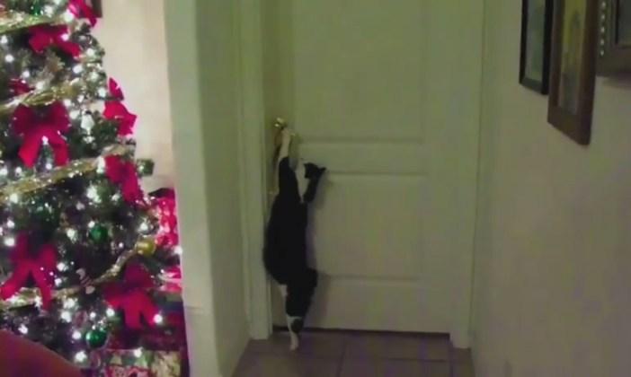 ドアを開ける伸びた猫