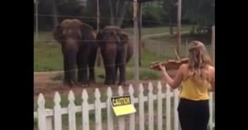 ヴァイオリンで踊る象