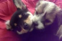 抱き合う2匹の犬