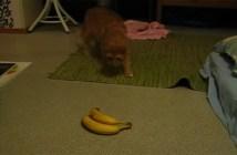 バナナと猫