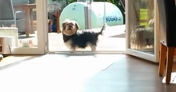 窓が閉まっていると思っている犬