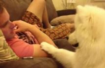 モフモフの犬