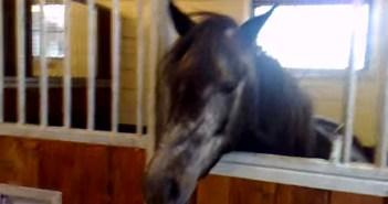 意味不明の動きをする馬