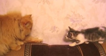 不思議な動きをする猫