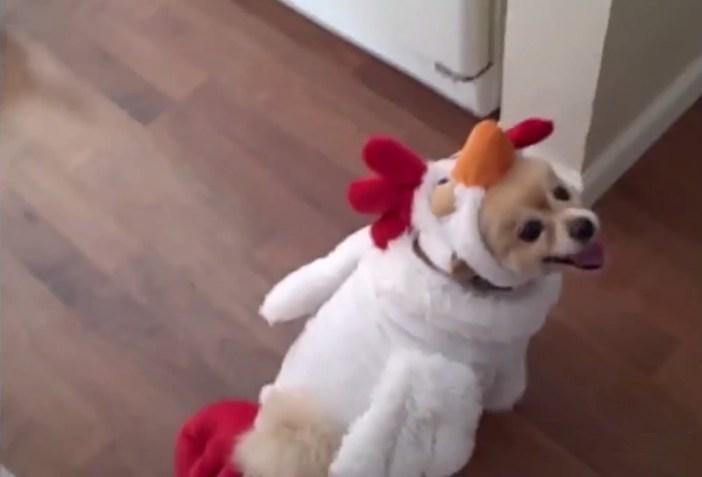 ハロウィンコスプレの犬