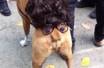 犬のおしりの顔